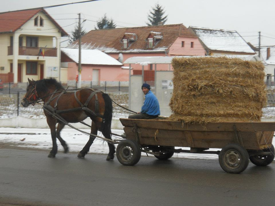 wanderlusting-captain-clark-horse-cart-romania